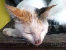 piękna dof ogniska nos psa obrazu s płycizny makro śpi Obraz Stock