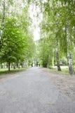 Piękna droga w lesie fotografia royalty free