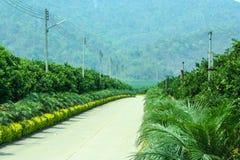 Piękna droga w palmy i pomarańcze polu Fotografia Royalty Free