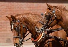 Piękna drużyna konie ciągnie stagecoach zdjęcie royalty free