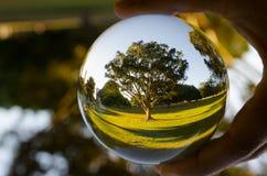 Piękna drzewna fotografia w jasnej krystalicznej szklanej piłce Zdjęcia Royalty Free
