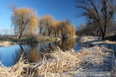 piękna dzień parka zima Obrazy Royalty Free