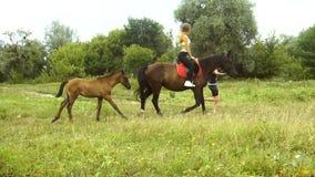 Piękna dziewczyna jedzie na horseback obok biegać małego źrebięcia zdjęcie wideo