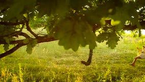 Piękna dziewczyna na huśtawce w parku, lasowe dębowe gałąź zbiory wideo