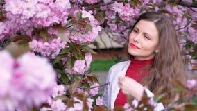 Piękna dziewczyna wśród czereśniowego okwitnięcia Sakura wiosny drzewnych menchii kwitnie zbiory wideo