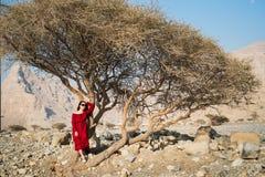 Piękna dziewczyna w czerwieni sukni bellow pustyni drzewie obraz royalty free
