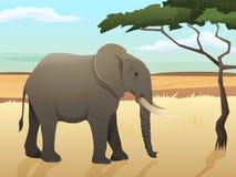 Piękna dzika afrykańska zwierzęca ilustracja Duża słoń pozycja na trawie z sawanny i drzewa tłem Zdjęcia Royalty Free