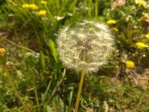 piękna formacja kwiaty zdjęcie stock