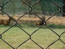 Piękna fotografia łańcuszkowego połączenia ogrodzenie obrazy stock
