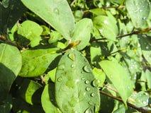 Piękna fotografia z kropli wodą na zielonych leafes Fotografia Stock