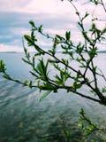 Piękna gałąź na Syamozero jeziora tle Karelia, Rosja zdjęcie ruchomej zdjęcia stock