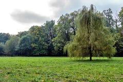 Piękna halizna w lata sosnowego lasowego uder błękitnym chmurnym niebie Jedlinowych drzew lata halizna scena spokojna Zdjęcia Stock