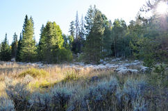 Piękna halna łąka w spadku Obrazy Royalty Free