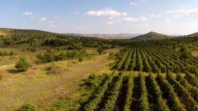 Piękna halna dolina z winnicami, widok z lotu ptaka zbiory
