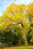 Piękna jesień Obrazy Stock
