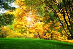 Piękna jesień Zdjęcia Royalty Free