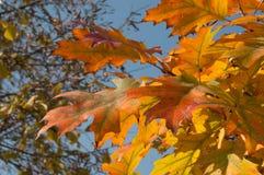 Piękna jesień Zdjęcia Stock