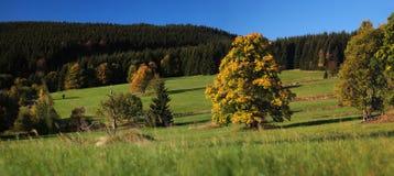 Piękna jesień drzewa panorama Obrazy Royalty Free