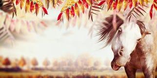 Piękna jesień krajobrazu panorama z drzewami, polem i niebem, Spadek plenerowa natura obraz royalty free