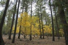 Piękna jesień W lesie Obrazy Royalty Free
