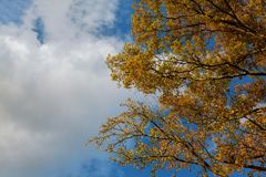 Piękna jesieni drzewa granica z spada puszków starymi liśćmi nad błękitnym chmurnym niebem, Fotografia Stock