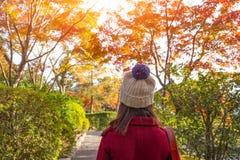 Piękna jesieni kobieta z jesień liśćmi na spadek natury tle, jesieni dziewczyna stoi backwards i ogląda naturę zdjęcia royalty free