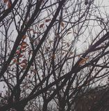 Piękna jesieni roślina Zdjęcia Stock