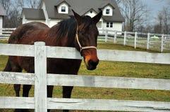 Piękna końska pozycja ogrodzeniem przy Amish stwarza ognisko domowe w Ohio fotografia royalty free