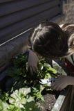 Piękna kobieta bierze opiekę miastowy warzywo ogród zdjęcie stock
