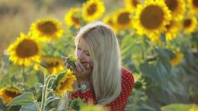 Piękna kobieta obwąchuje kwiatu w słonecznika polu, zwolnione tempo zbiory