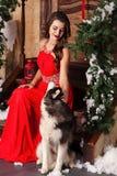 Piękna kobieta w czerwonym wieczór sukni obsiadaniu na krokach z jej psem, husky na tle boże narodzenia dekorowali pokój obrazy royalty free