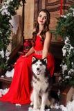 Piękna kobieta w czerwonym wieczór sukni obsiadaniu na krokach z jej psem, husky na tle boże narodzenia dekorowali pokój obrazy stock