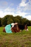 Piękna kobieta z koniem w polu Dziewczyna dalej Zdjęcia Stock