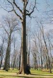 Piękna kochająca para uśmiecha się wielkiego drzewa w parku i całuje Obraz Stock