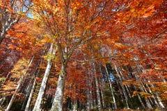 piękna kolorowa jesień w lasach Obrazy Stock