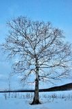 piękna krajobrazowa osamotniona śnieżna drzewna zima Obrazy Stock