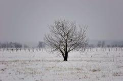 piękna krajobrazowa osamotniona śnieżna drzewna zima Obraz Royalty Free