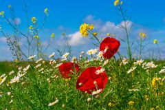 piękna krajobrazowa wiejska wiosna zdjęcie stock