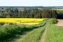 piękna krajobrazowa wiejska wiosna Fotografia Royalty Free