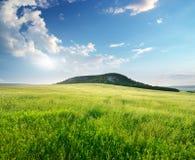 Piękna krajobrazowa wiosny łąka fotografia royalty free