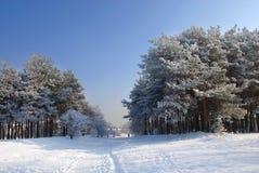 piękna krajobrazowa zima obraz royalty free
