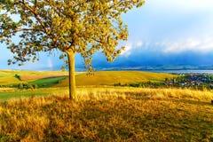 Piękna krajobrazu, zieleni i koloru żółtego łąka, i Obraz Royalty Free