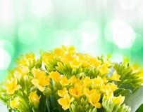 piękna kwiatów macro wiosna zdjęcie stock