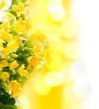 piękna kwiatów macro wiosna zdjęcie royalty free