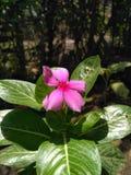Piękna kwiat natura fotografia stock