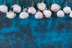 Piękna kwiat rama z różami na błękitnym tle Zdjęcia Stock