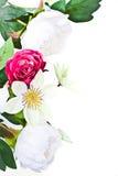 Piękna kwiat rama z różami odizolowywać na bielu Obraz Royalty Free