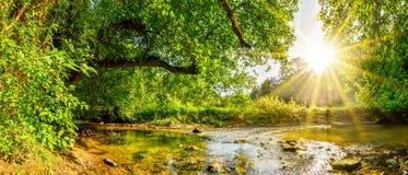 Piękna lasowa panorama obrazy stock