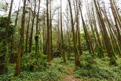 piękna lasowa wiosna zdjęcia stock