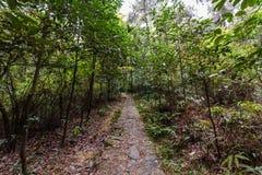 piękna lasowa wiosna zdjęcie royalty free